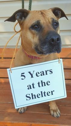 Dog Left At Shelter After Her Owner Died Is Still There Years Later