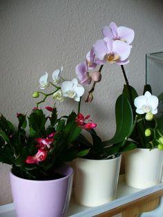 Orchids, Planter Pots, Album, Houses, Lilies, Orchid