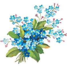 незабудки картинки нарисованные: 10 тыс изображений найдено в... ❤ liked on Polyvore featuring flowers