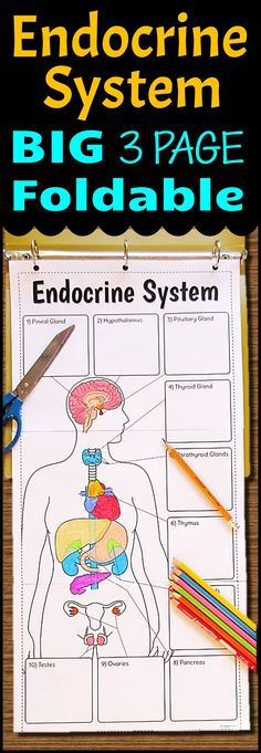Gr.7-12. Teach the endocrine system using this very large 3 page endocrine system foldable that can be used in an INB or binder with very minimal cutting. Students will love the space they have to color as well as record all their descriptions. 11 different options are provided for differentiation. Use it as a lesson that can then be used as a graphic organizer for review.