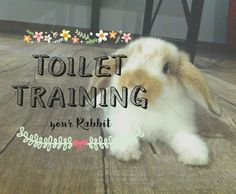 Rabbits  can be  TOILET-TRAINED , and this is perhaps one of the best things about having a bunny as a pet - THEY ARE SO CLEAN.        So yo...