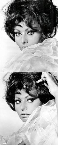 Richard Avedon's portrait of Sophia Loren from Arabesque