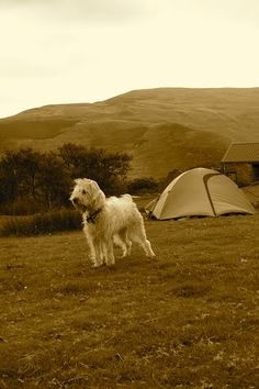 Tips for Tent Camping with your Dog