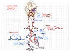 Fisiopatología y prevención del ictus cardioembólico. lachuletadeosler.com Dr. Augusto Saldaña M.