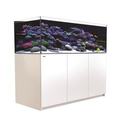 100 Gallon Glass Aquarium