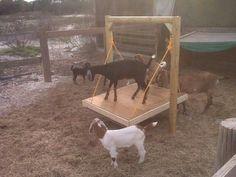 Goat swing idea