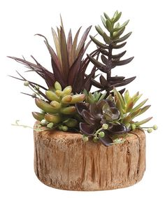 Look at this 8'' Succulent Garden Arrangement on #zulily today!