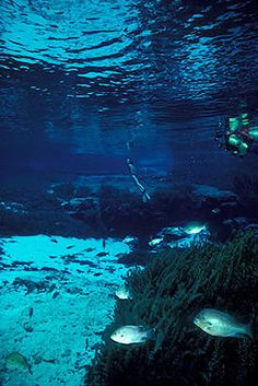 High Springs, FL (west of Gainesville): Ginnie Springs