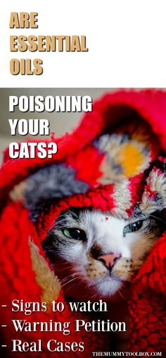Cat Care Health Are essential oils harming cats? Here's a warning and petition that could be responsible for making your cat sick. Plus it's potentially fatal. Cat Care Tips, Dog Care, Pet Tips, Cat Symptoms, Raising Kittens, Cat Health Care, Outdoor Cat Enclosure, Sick Cat, Pumpkin Dog Treats