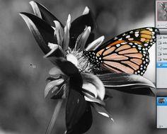 Zwart-wit met detail in kleur.  Via gratis online programma, AANRADER!  http://pixlr.com/editor/