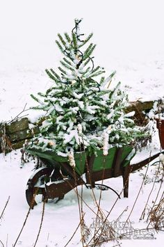 Christmas tree outdoors