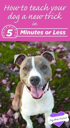 You don't need hours upon hours to teach your dog a new trick. These five awesome tricks take five minutes or less to get started! @KaufmannsPuppy