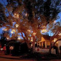 Chandelier Tree is a twinkling star in Silver Lake