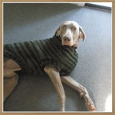 Knitting Pattern For Dog Coat Large : 1000+ images about Knitting for Pets on Pinterest Dog sweaters, Pet beds an...