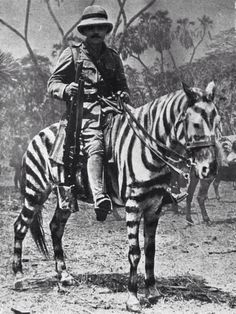 WWI: British soldiers in Africa forced to use zebras due to shortage of horses.