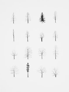 abigailmargueritesmiles:  winter trees.