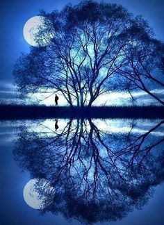 Gorgeous! Moon, tree, reflection