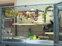 Chew station! My Old Chinchilla Cage Setup with diy shelves & lots of noms!  Cage is a midwest ferret nation 182 with a model 142 added to the top of it. Pans were made by Bass Co. which I've linked below. http://www.bassequipment.com/Cage+Pans/Ferret+Pans/default.aspx
