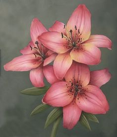 Asiatic Lilies by Deanne Fortnam Lily Painting, Painting & Drawing, Art Floral, Botanical Illustration, Botanical Art, Flowers Nature, Beautiful Flowers, Watercolor Flowers, Watercolor Paintings