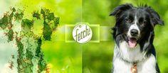 O aplicativo fetch! conta uma coleção de extensão de raças que contém informações como disposição, o tamanho, pelagem e quais os tipos de famílias são os mais adequados para cada um. Além disso, para manter o aplicativo atualizado, a equipe consulta vários especialistas de cães e clubes de canil para repassar as informações sobre as raças de cães a fim de não depender exclusivamente do conjuntos de dados recolhidos.