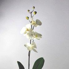 Orchidée phalaénopsis Ivoire, 70cms, 6,9€