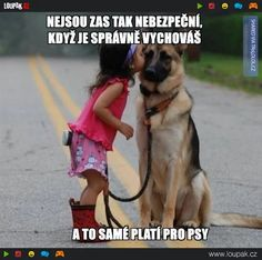 Wicked Training Your German Shepherd Dog Ideas. Mind Blowing Training Your German Shepherd Dog Ideas. Funny Cute, Hilarious, Top Funny, Baby Animals, Funny Animals, Cute Animals, Dog Quotes, Animal Quotes, Dog Humor