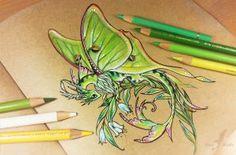 Lunar moth dragon by AlviaAlcedo on DeviantArt Fantasy Dragon, Dragon Art, Fantasy Art, Dragon Time, Animal Drawings, Art Drawings, Dragon Drawings, Dragon Oriental, Butterfly Dragon