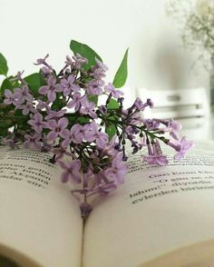 Extraordinary beauty is all around us Book Flowers, Lilac Flowers, Purple Lilac, Beautiful Flowers, Book Aesthetic, Flower Aesthetic, Lilac Tree, Yennefer Of Vengerberg, No Rain