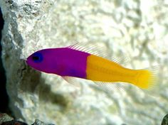 colorful-tropical-fishes