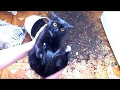 WARNING: You may DISLOCATE YOUR JAW FROM LAUGHING - Best FUNNY CAT videos - YouTube