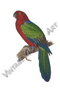 African Love, Vintage Birds, Parakeet, Image Shows, Love Birds, Printable Wall Art, Background Images, Parrot, Card Making