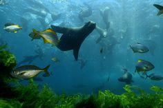 El aumento de la contaminación atmosférica provocará que peces y otras especies marinas de lugares con alta concentración de este elemento en el Atlántico Norte, Pacífico y Antártida padecerán problemas de hipercapnia.