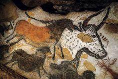 La cueva de Altamira, bisontes en Cantabria