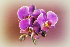 study in violet 2 by Su58.deviantart.com on @DeviantArt