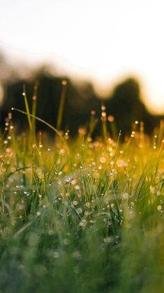 Lawn Green Nature Sunset Light Bokeh Spring iPhone 5s wallpaper