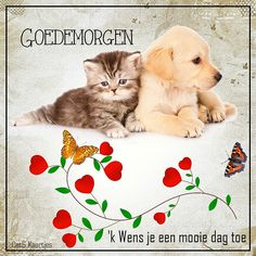 Cute Good Morning, Good Afternoon, Good Morning Quotes, Old Couples, E Cards, Happy Friday, Mom And Dad, Kids Rugs, Humor