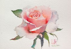 Watercolor rose/ by Sattha Homsawat (LaFe) Watercolor Rose, Watercolor Cards, Watercolour Painting, Painting & Drawing, Watercolors, Drawing Drawing, Watercolor Portraits, Watercolor Landscape, Pinturas Em Tom Pastel