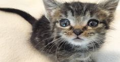 This Tiny Kitten Hits the Jackpot of Foster Moms - With Two of Them!