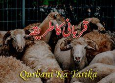 Qurbani ka Tarika Aur Us Ki Dua In Hindi/Urdu Ramadan Mubarak, Jumma Mubarak, Islamic Information, Roman