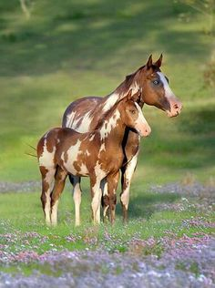 Cute mommy and baby horses