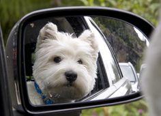 car ride-looks just like my Sam