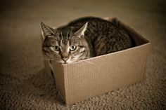 2 Stupid Cats Science: Quantum love of boxes Schrödinger's Cat