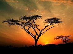 Africa.....reminds me of the lion king