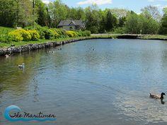 Toddler Time: Rockwood Park, Saint John - The Maritimer Duck Pond, Saint John, New Brunswick, Parks, Saints, River, Outdoor, Outdoors, San Juan
