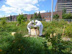 Promenades de Jane 2015 : 5 occasions de discuter la ville par l'agriculture urbaine - Nouvelles - Agriculture urbaine Montréal
