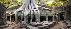Angkor Wat Cambodia  Ta Prom Khmer ancient Buddhist temple in jungle forest  Famous landmark, place of worship and popular tourist travel destination in Asia  photo