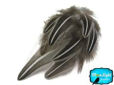 Exotic Feathers 50 Pieces  NATURAL BLACK by MoonlightFeatherInc, $5.95