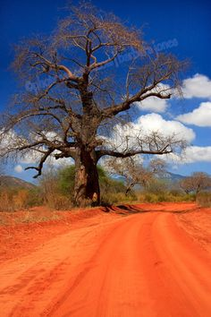 red dirt and a Baobab tree, Kenya.