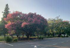 febrero 2'020 se puede disfrutar en la caminata o paseo de los palos borrachos en flor en el parque Eva Hajduk - Ranelagh, Berazategui, Buenos Aires Sidewalk, Country Roads, Buenos Aires, Summer Time, Sticks, Parking Lot, February, Parks, Walkway