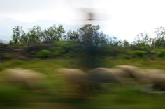 Blurry sheeps and shepherd in Cumbres de Maltrata, Mexico. Picture taken by me.